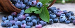 super-fruta-conheca-os-beneficios-do-mirtilo-para-a-saude-2-1-840x320